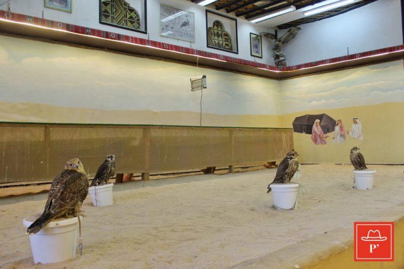 Souq Waqif, şahin dükkanları, Doha-Katar